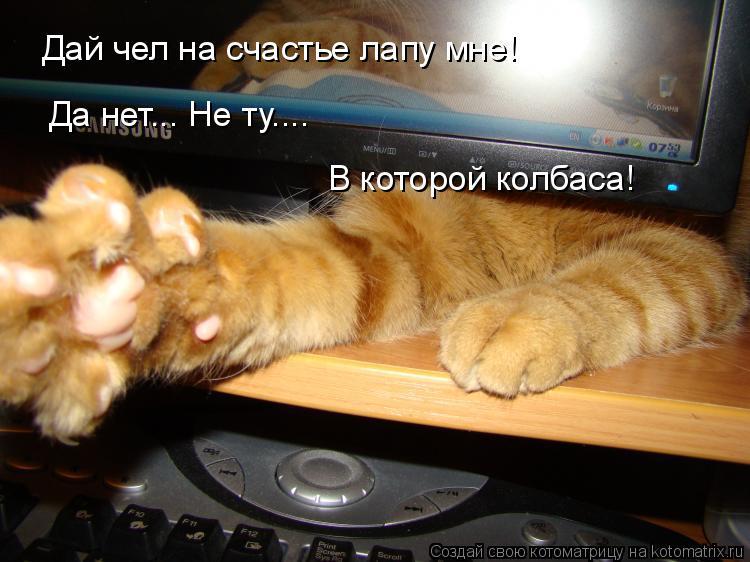 Котоматрица: Дай чел на счастье лапу мне! Да нет... Не ту.... В которой колбаса!