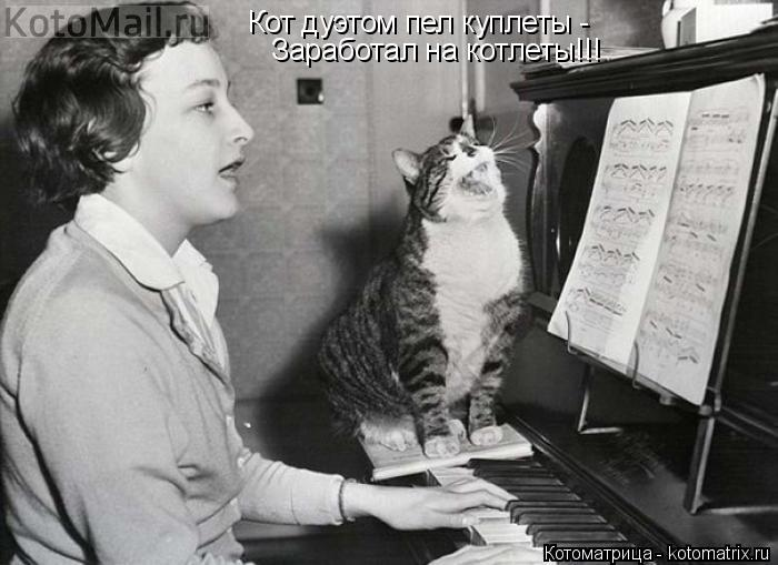 Котоматрица: Кот дуэтом пел куплеты -  Заработал на котлеты!!!