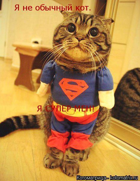 Котоматрица: Я СУПЕР МЕН! Я не обычный кот.