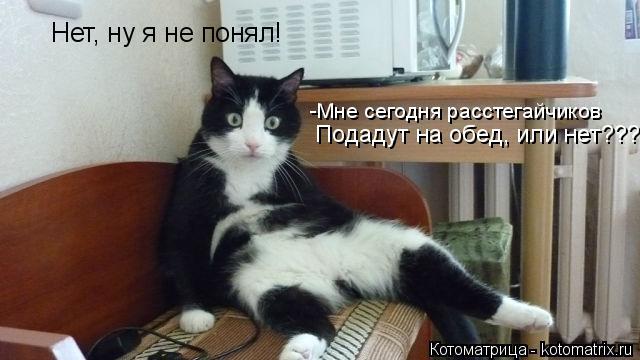 Котоматрица: Нет, ну я не понял! -Мне сегодня расстегайчиков Подадут на обед, или нет???