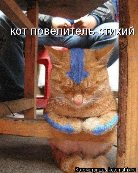 Котоматрица: кот повелитель стихий