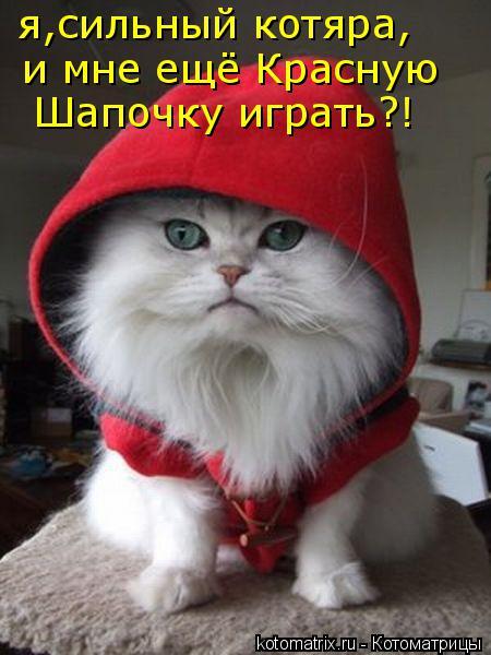Котоматрица: я,сильный котяра, и мне ещё Красную Шапочку играть?!