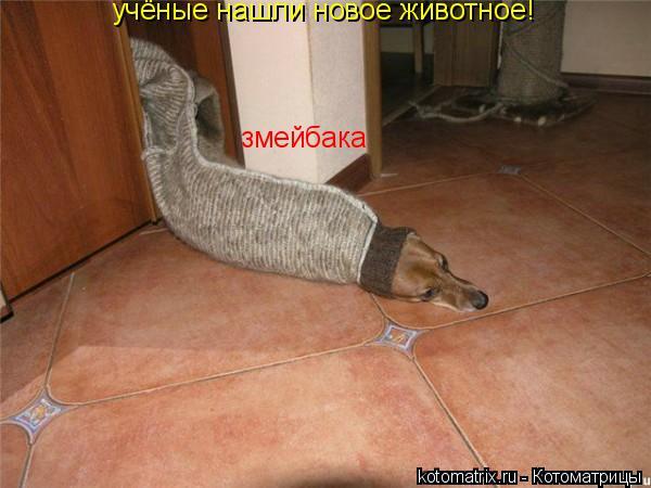 Котоматрица: учёные нашли новое животное! змейбака