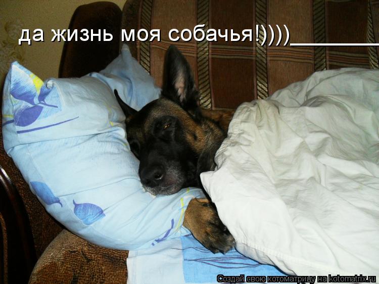 Котоматрица: да жизнь моя собачья!))))__________