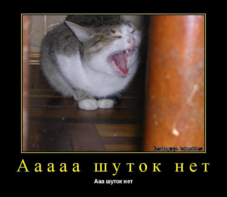 Котоматрица: Ааааа шуток нет Ааа шуток нет