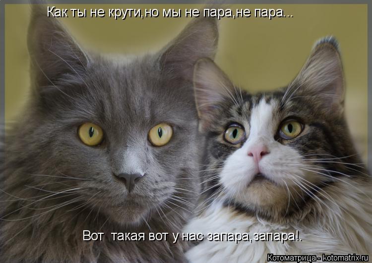 Котоматрица: Как ты не крути,но мы не пара,не пара...  Вот  такая вот у нас запара,запара!.