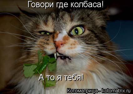Котоматрица: Говори где колбаса!  А то я тебя!