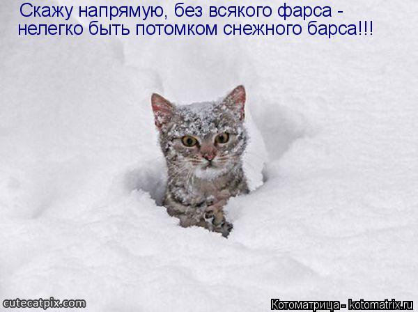 Котоматрица: Скажу напрямую, без всякого фарса -  нелегко быть потомком снежного барса!!!