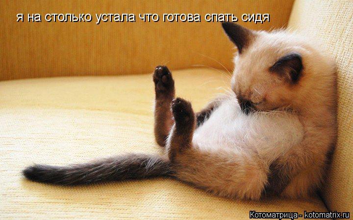 Котоматрица: я на столько устала что готова спать сидя