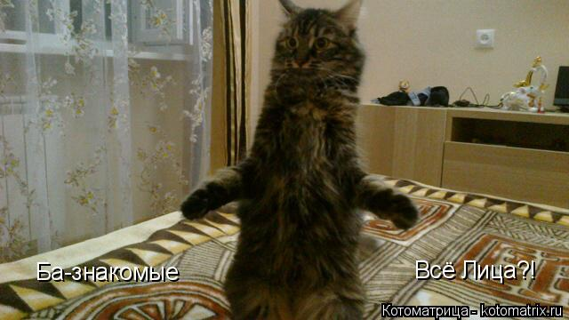 http://kotomatrix.ru/images/lolz/2014/01/30/kotomatritsa_EG.jpg