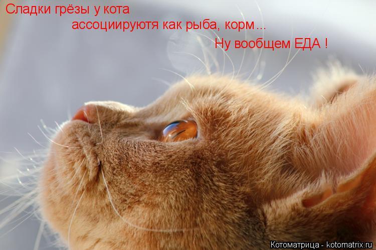 Котоматрица: Сладки грёзы у кота ассоциируютя как рыба, корм ... Ну вообщем ЕДА !