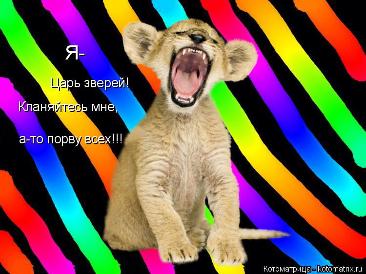 Котоматрица: Я- Царь зверей! Кланяйтесь мне, а-то порву всех!!!