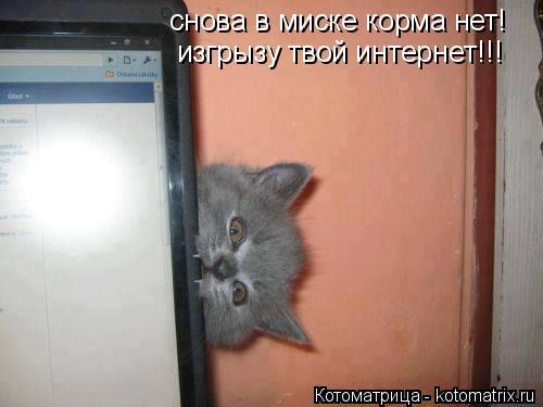 Котоматрица: снова в миске корма нет! изгрызу твой интернет!!!