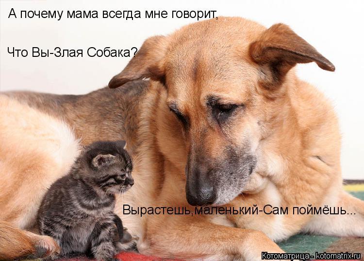 Котоматрица: А почему мама всегда мне говорит, Что Вы-Злая Собака? Вырастешь,маленький-Сам поймёшь...