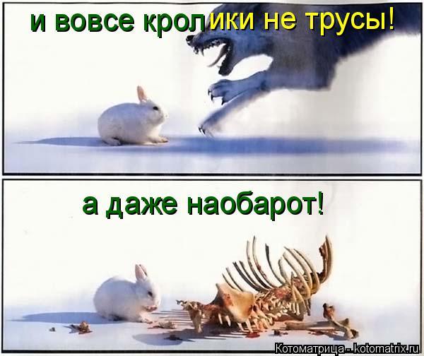 Котоматрица: ики не трусы! и вовсе крол а даже наобарот!