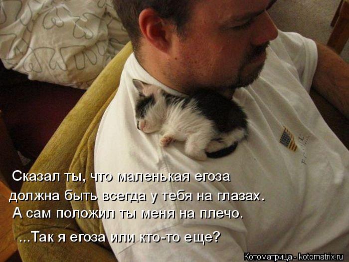 Котоматрица: должна быть всегда у тебя на глазах. Сказал ты, что маленькая егоза А сам положил ты меня на плечо. ...Так я егоза или кто-то еще?