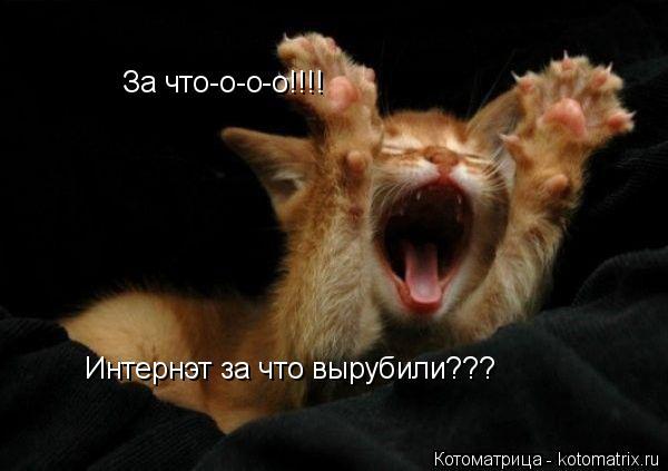 Котоматрица: За что-о-о-о!!!! Интернэт за что вырубили???