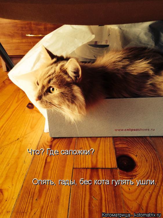 Котоматрица: Что? Где сапожки? Опять, гады, бес кота гулять ушли.