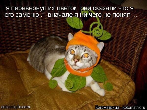 Котоматрица: я перевернул их цветок ,они сказали что я  его заменю ... вначале я ни чего не понял ...
