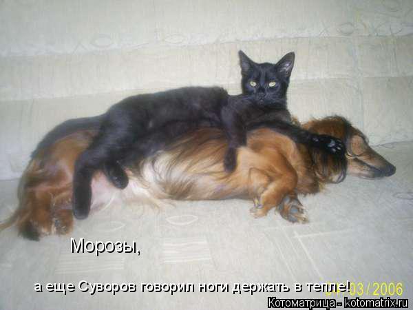 Котоматрица: Морозы, а еще Суворов говорил ноги держать в тепле!