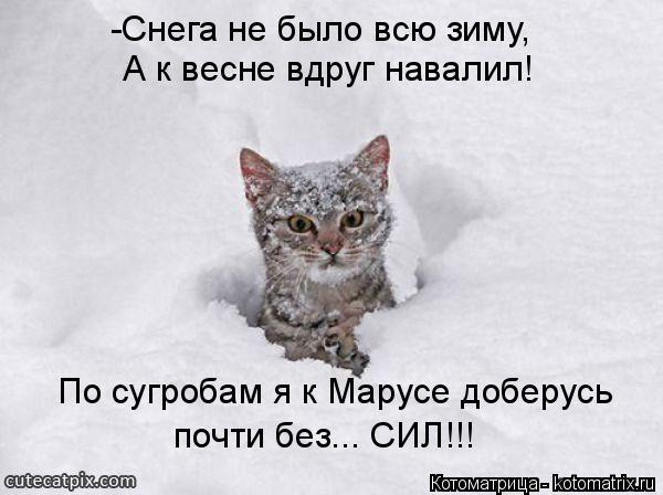 Котоматрица: -Снега не было всю зиму, А к весне вдруг навалил! По сугробам я к Марусе доберусь почти без... СИЛ!!!
