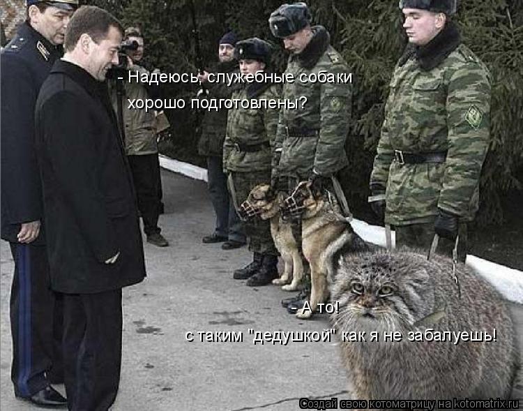 """Котоматрица: - Надеюсь, служебные собаки  хорошо подготовлены? - А то! с таким """"дедушкой"""" как я не забалуешь!"""