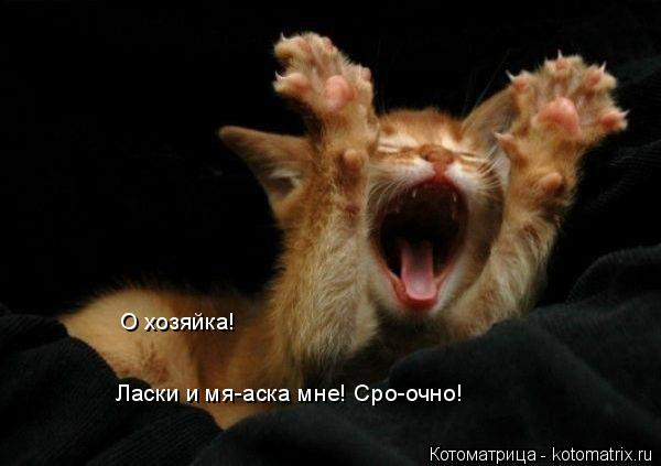 Котоматрица: О хозяйка! Ласки и мя-аска мне! Сро-очно!
