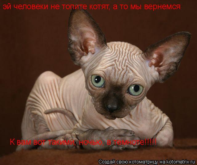 Котоматрица: эй человеки не топите котят, а то мы вернемся К вам вот такими, ночью, в темноте!!!!!