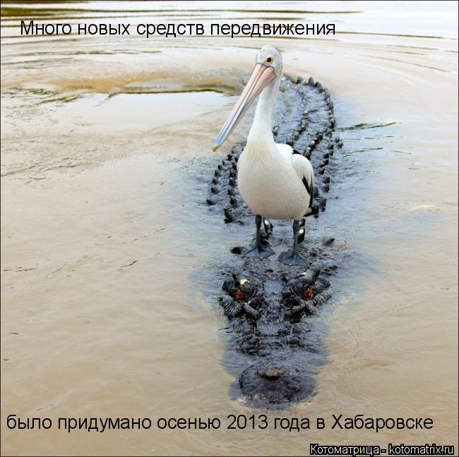 Котоматрица: Много новых средств передвижения было придумано осенью 2013 года в Хабаровске
