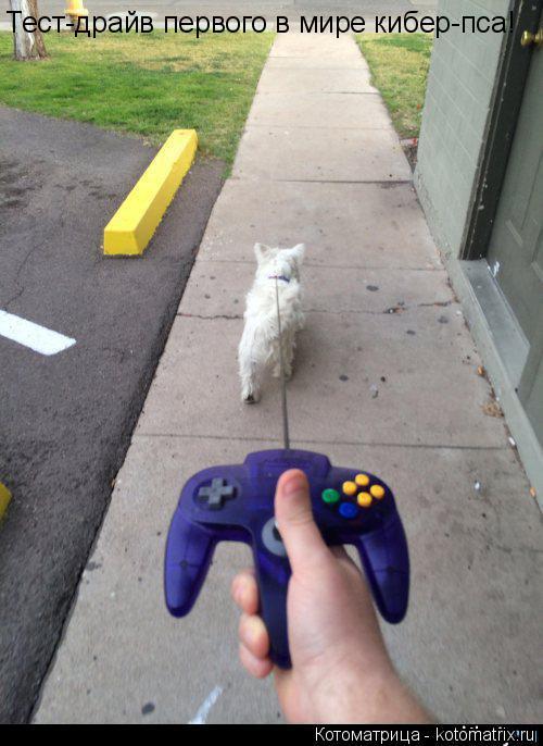 Котоматрица: Тест-драйв первого в мире кибер-пса!