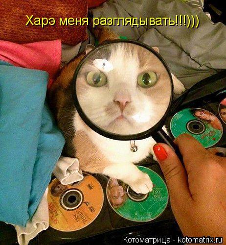 Котоматрица: Харэ меня разглядывать!!!)))