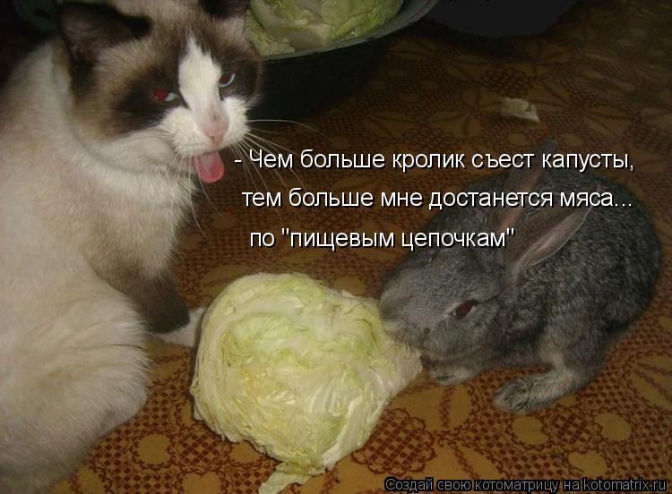 """Котоматрица: - Чем больше кролик съест капусты, тем больше мне достанется мяса... по """"пищевым цепочкам"""""""