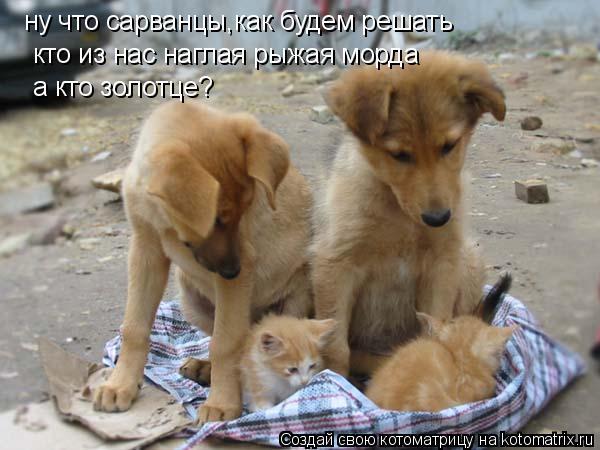 Котоматрица: ну что сарванцы,как будем решать кто из нас наглая рыжая морда а кто золотце?