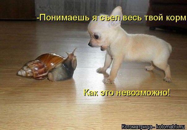 Котоматрица: -Понимаешь я съел весь твой корм Как это невозможно!