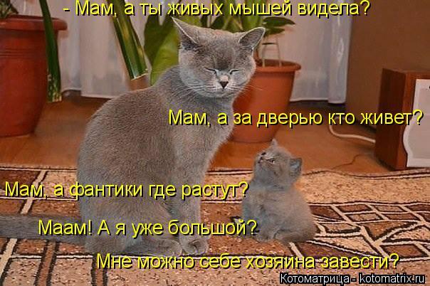 Котоматрица: - Мам, а ты живых мышей видела? Мам, а за дверью кто живет? Мам, а фантики где растут? Маам! А я уже большой?  Мне можно себе хозяина завести?