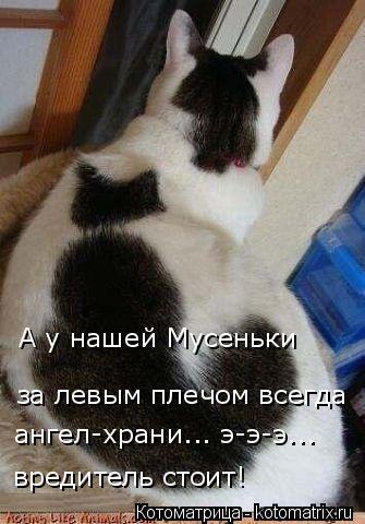 Котоматрица: А у нашей Мусеньки  за левым плечом всегда ангел-храни... э-э-э... вредитель стоит!
