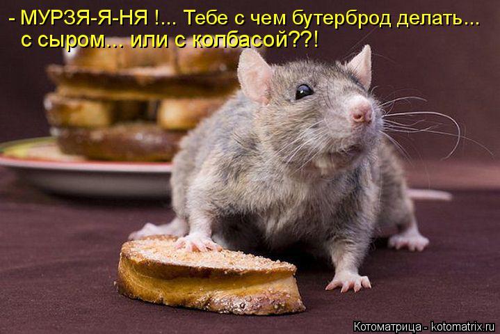 Котоматрица: - МУРЗЯ-Я-НЯ !... Тебе с чем бутерброд делать... с сыром... или с колбасой??!