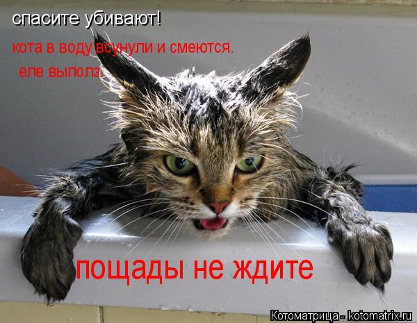 Котоматрица: спасите убивают! спасите убивают! кота в воду всунули и смеются.  еле выполз.  пощады не ждите