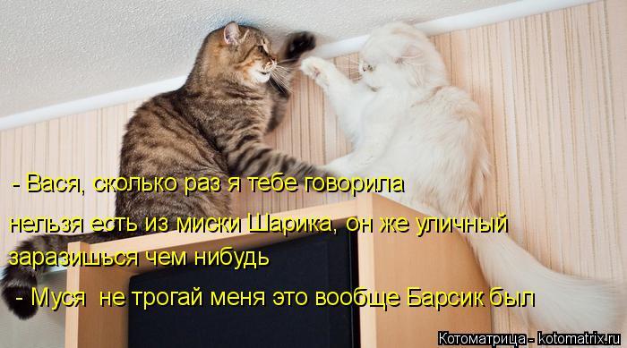 Котоматрица: - Вася, сколько раз я тебе говорила, что нельзя в моём присутствии глядеть на других Мурок - Вася, сколько раз я тебе говорила нельзя есть из м