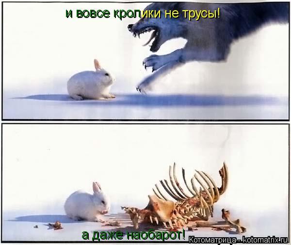 Котоматрица: и вовсе крол ики не трусы! а даже наобарот!