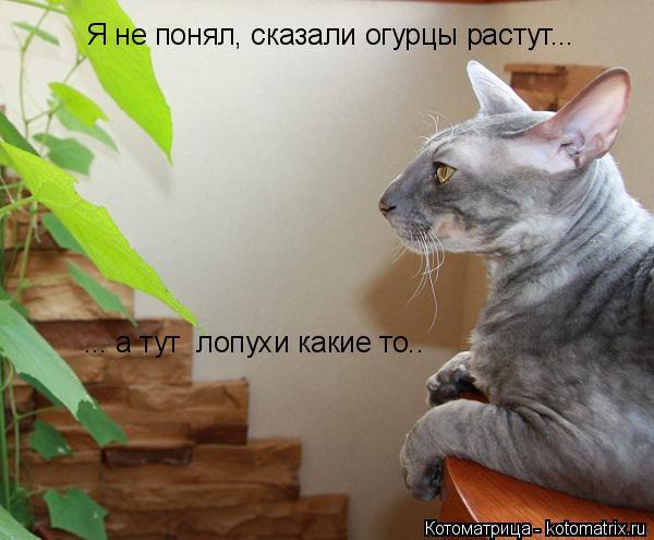 Котоматрица: Я не понял, сказали огурцы растут... ... а тут  лопухи какие то..