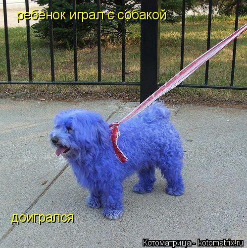 Котоматрица: ребёнок играл с собакой доигрался