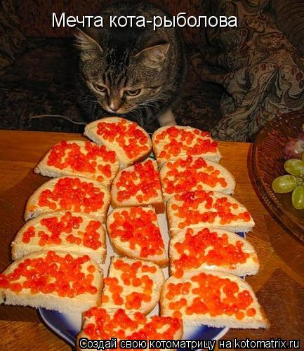 Котоматрица: Мечта кота-рыболова