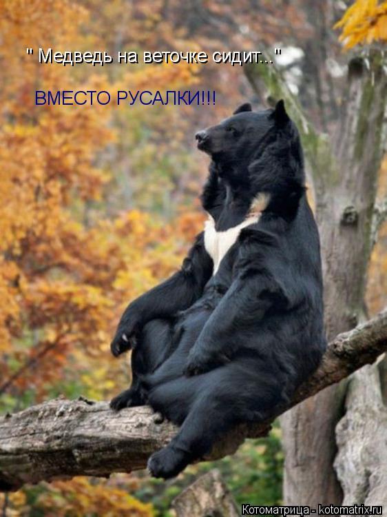 """Котоматрица: """" Медведь на веточке сидит..."""" """" Медведь на веточке сидит..."""" ВМЕСТО РУСАЛКИ!!!"""