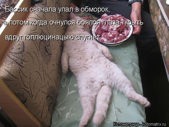 Котоматрица: Барсик сначала упал в обморок, а потом когда очнулся боялся глаза ткрыть вдруг голлюцинацыю спугнёт