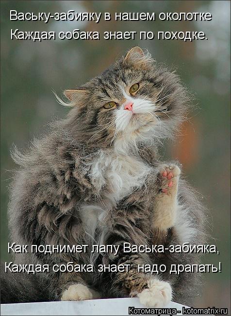 Котоматрица: Ваську-забияку в нашем околотке Каждая собака знает по походке. Как поднимет лапу Васька-забияка, Каждая собака знает: надо драпать!