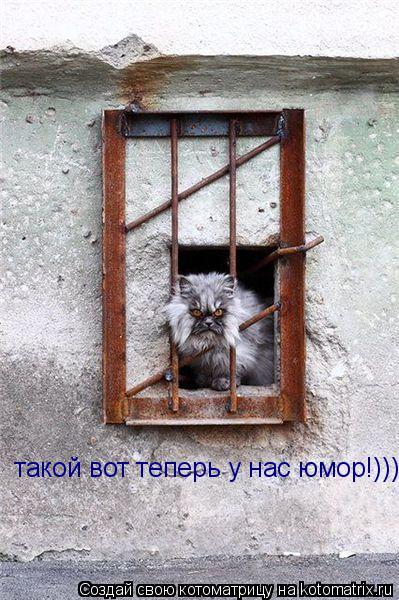 Котоматрица: такой вот теперь у нас юмор!))))