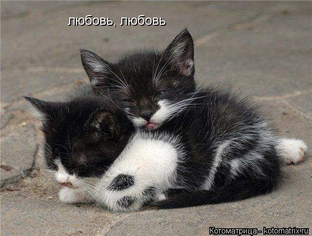 Котоматрица: любовь, любовь
