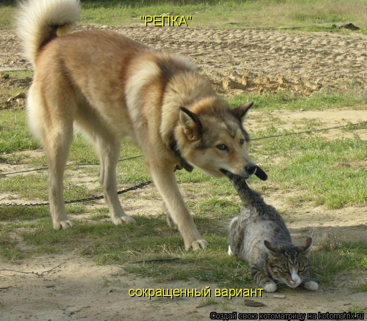"Котоматрица: ""РЕПКА""  сокращенный вариант"