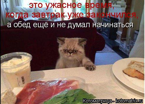 Котоматрица: это ужасное время,  когда завтрак уже закончился,  а обед ещё и не думал начинаться